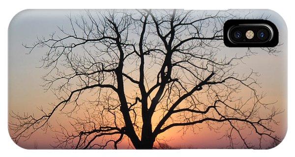 November Walnut Tree At Sunrise IPhone Case