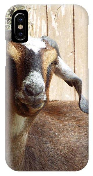 Nubian Goat IPhone Case