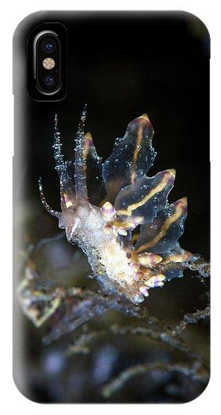 Nudibranch Feeding Phone Case by Ethan Daniels