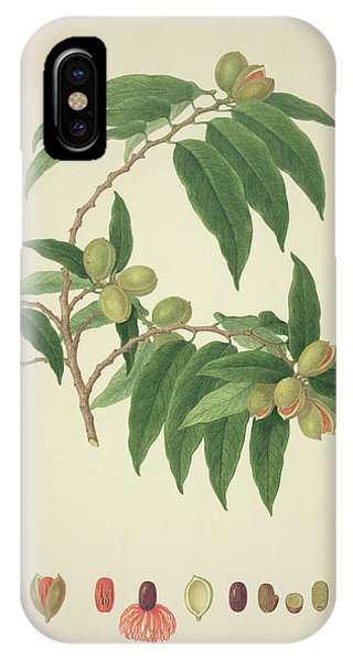 Nutmeg Plant Phone Case by Natural History Museum, London/science Photo Library