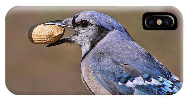 Nutty Bluejay IPhone Case