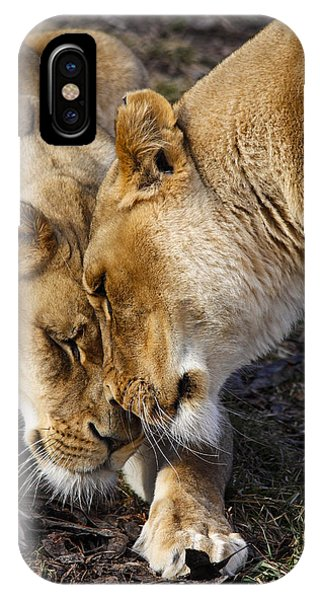 Nuzzling Lions Phone Case by Jill Bell