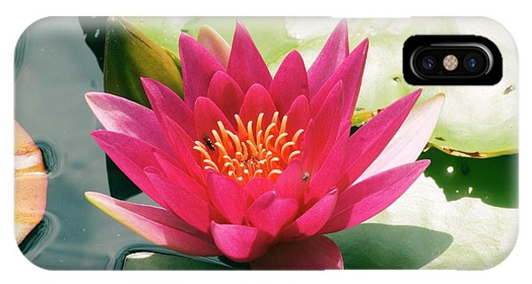 Nymphaea 'escarboucle' Phone Case by Adrian Thomas