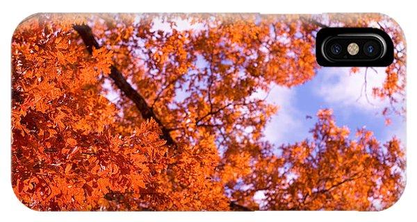 Oak In Evening Sun IPhone Case