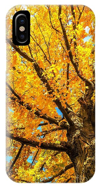 Oak In The Fall IPhone Case