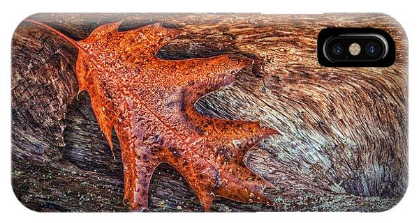 Oak Leaf Phone Case by Todd Bielby