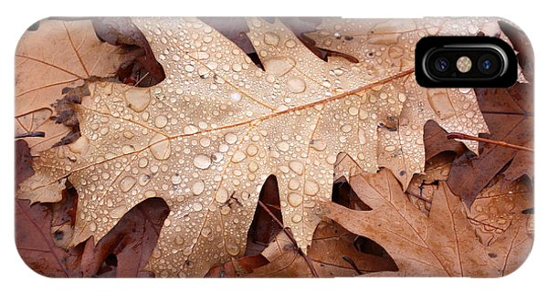 Oak Leaves And Water Drops IPhone Case