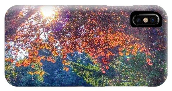 Sunny iPhone Case - Oak Street Early Evening Light by Anna Porter