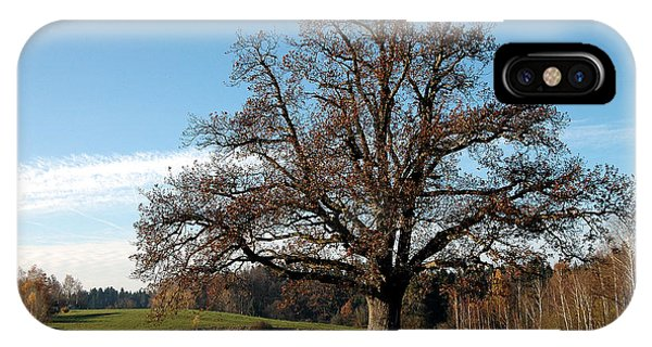 Oak Tree With Benches IPhone Case