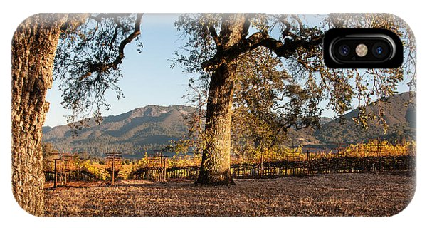 Oak Trees In The Vineyard Phone Case by Kent Sorensen