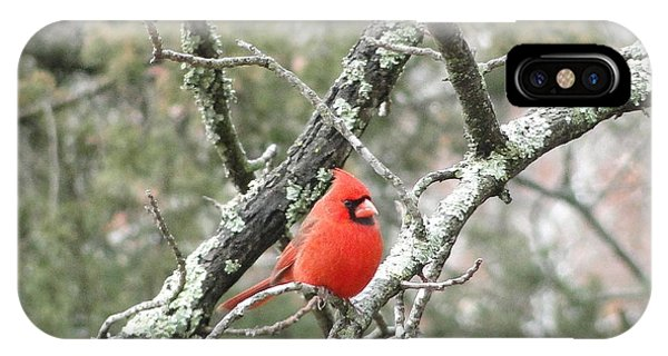 Observing Cardinal IPhone Case