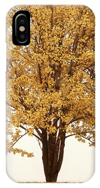 October Trees IPhone Case