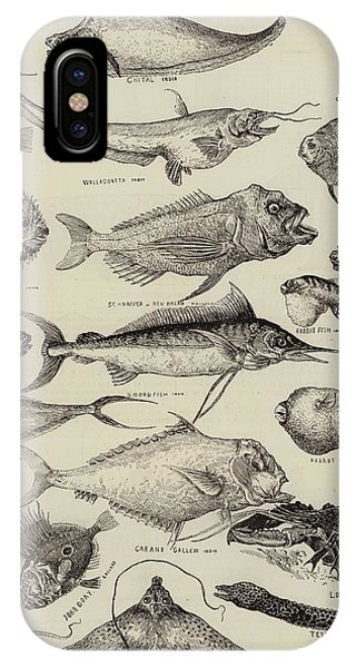 Ichthyology iPhone Case - Odd Fish At The International Fisheries Exhibition by Louis Wain