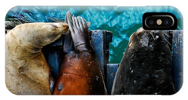 Odd Man Out California Sea Lions IPhone Case