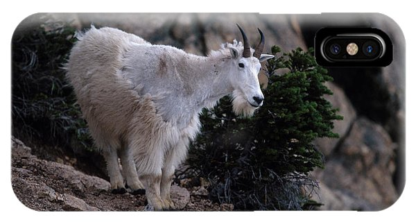 Goat iPhone Case - Okanogan National Forest by Peter Essick