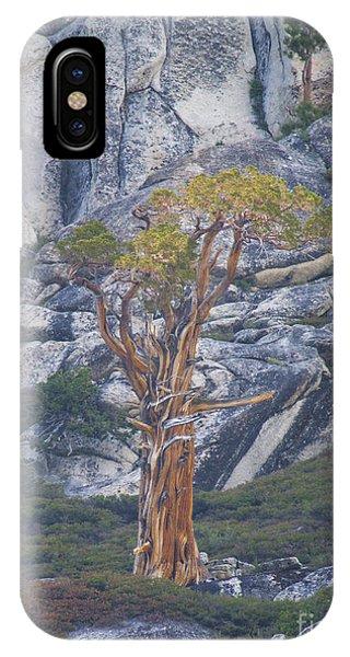 Old Juniper Pine  IPhone Case
