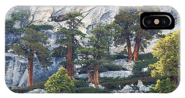 Old Juniper Pines Rule IPhone Case