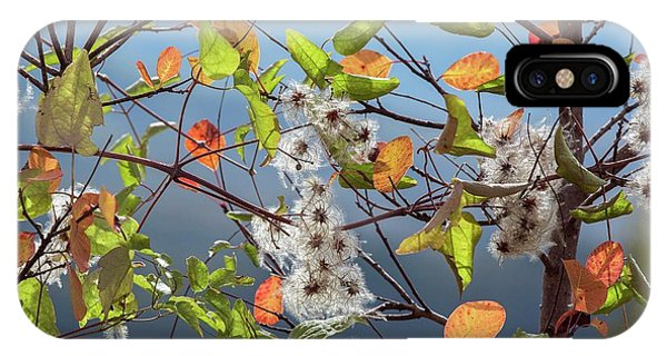 Old Man's Beard And Smokebush Phone Case by Bob Gibbons/science Photo Library