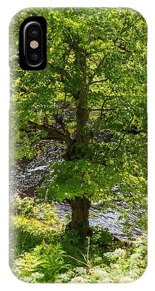 Old Small Leaved Lime At The Riverbank In Oravi IPhone Case