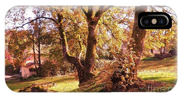Old Tree In Sun Light IPhone Case
