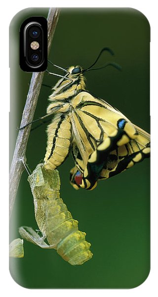 Chrysalis iPhone Case - Oldworld Swallowtail Emerging by Thomas Marent