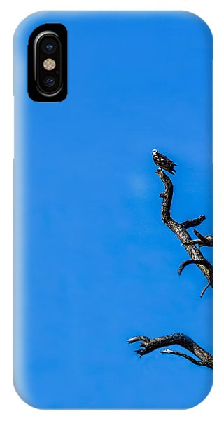 Osprey iPhone Case - On Point by Marvin Spates