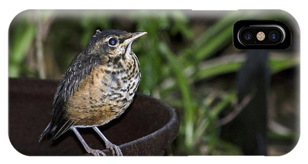 On The Fire Pot-fledging Robin IPhone Case
