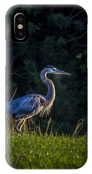 Cypress iPhone Case - On The March by Marvin Spates