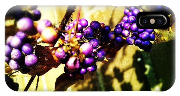 Shrub iPhone Case - On The Vine by Olivier Calas
