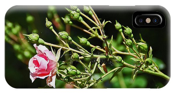 Rosebush iPhone Case - One Blossom by Aimee L Maher ALM GALLERY