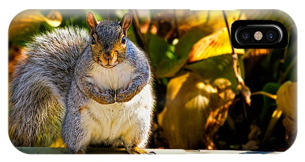 IPhone Case featuring the photograph One Gray Squirrel by Bob Orsillo