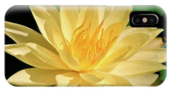 One Water Lily  IPhone Case