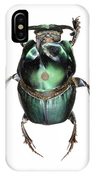 Coleoptera iPhone Case - Onthophagus Dung Beetle by Lawrence Lawry