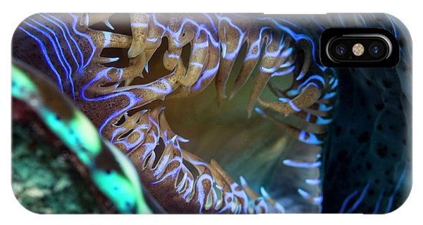 Barrier Reef iPhone Case - Open Giant Clam Siphon by Michael Szoenyi/science Photo Library