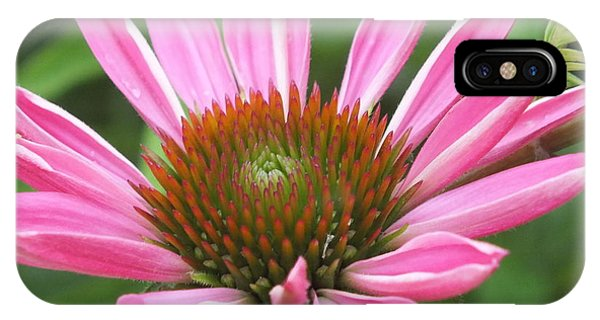 Opening Coneflower IPhone Case