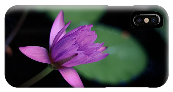 Aquatic Plants iPhone Case - Opening Water Lily by Mr Doomits