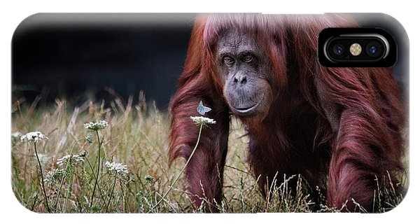 Grass iPhone Case - Orang-utan With Butterfly. by Hugh Wilkinson