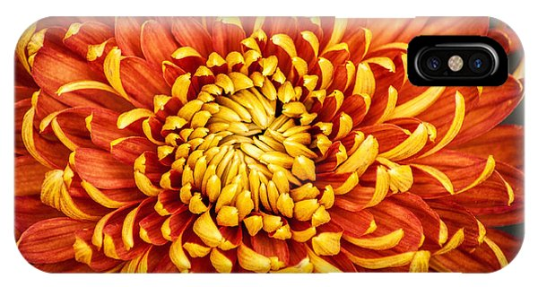 Orange And Yellow Mum IPhone Case