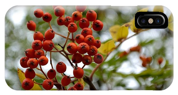 Orange Autumn Berries IPhone Case