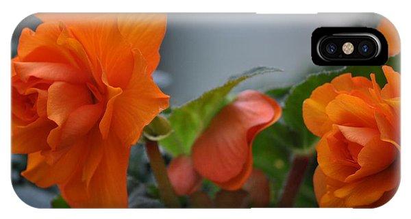 Orange Beauties IPhone Case