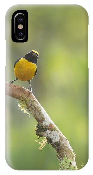 Orange-bellied Euphonia IPhone Case