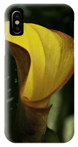 Orange Blooms IPhone Case