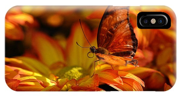 Orange Butterfly On Yellow Flowers IPhone Case