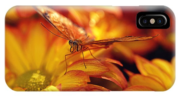 Orange Butterfly On Yellow Mums IPhone Case