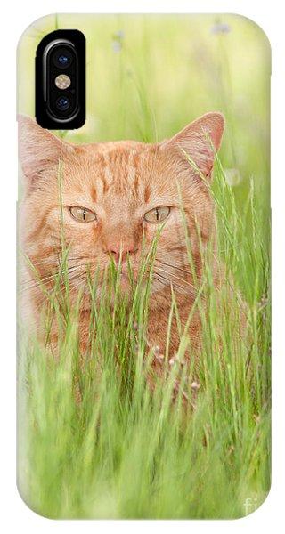 Orange Cat In Green Grass IPhone Case