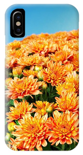 Orange Chyrsanthemum IPhone Case