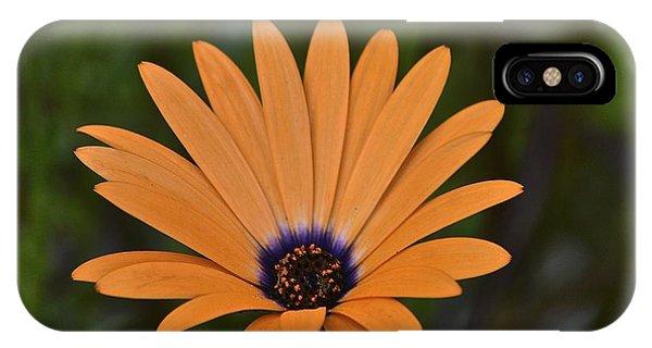 Orange Cream Phone Case by Marjorie Tietjen