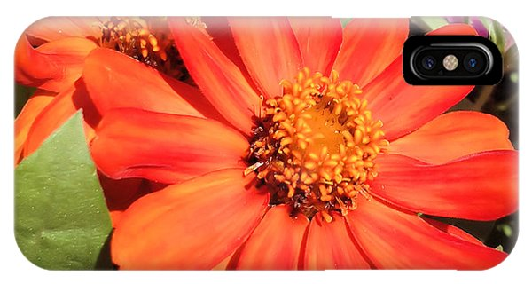Orange Daisy In Summer IPhone Case