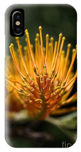 Orange Grevillea IPhone Case