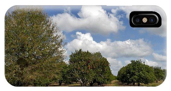 Orange Grove. Babb Farm Kissimmee Florida. IPhone Case
